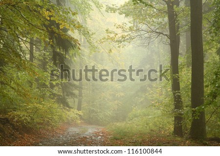 Path through autumn forest on a rainy day. - stock photo