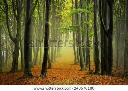 Path through autumn trees - stock photo