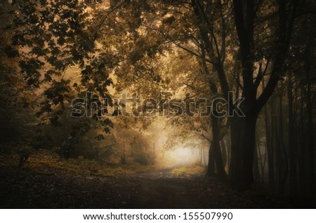 path through colorful forest in autumn - stock photo