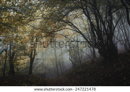 path through dark forest with spooky trees - stock photo