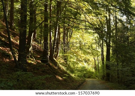 Path through early autumn forest at dusk. - stock photo