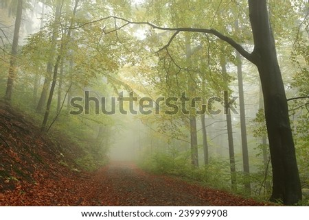 Path through early autumn forest on a foggy, rainy day. - stock photo
