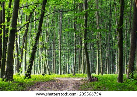 Path through enchanted spring green forest - stock photo