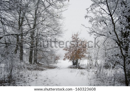 path through frozen woods in winter and orange leaves on a tree