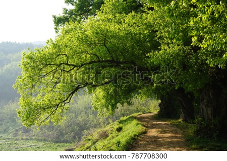 path through green trees in spring