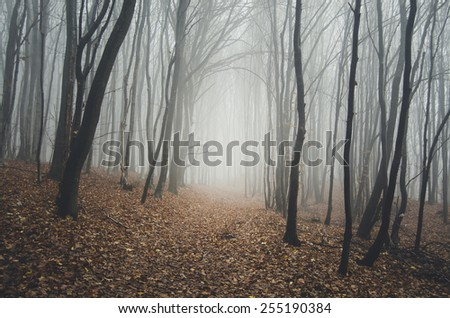 path through natural forest - stock photo