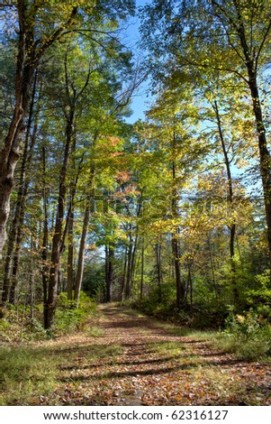 path through new england woods in early fall - stock photo