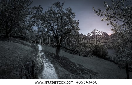 Path through orchards in the evening - Lovely countryside scenery with a path crossing the orchards from the Swiss Alps mountains, in the evening, as the sun sets down. - stock photo