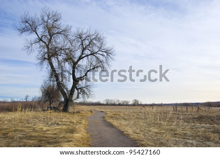Path through pasture on the Colorado prairie in the winter, with a tall and majestic bare cottonwood tree. - stock photo