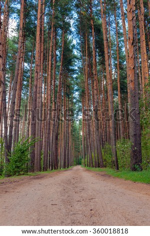 Path through pine-trees low point of view in summer day - stock photo