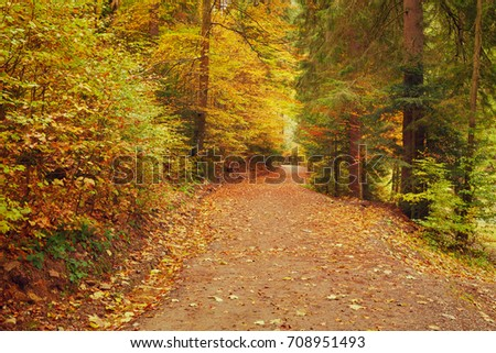 Path through the autumn forest. Colorful landscape.