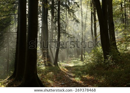 Path through the autumn forest on a foggy morning. - stock photo