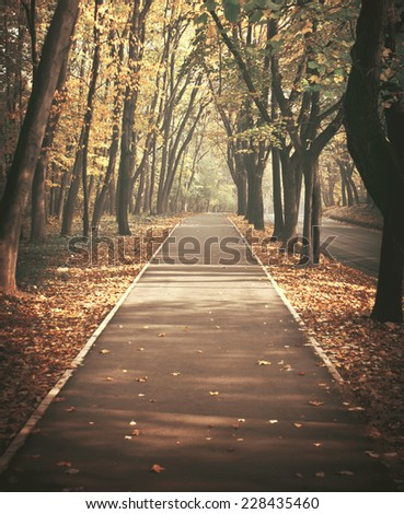 Path through the autumnal forest - stock photo