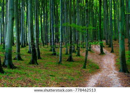 Path through the beech forest in the Jasmund National Park at Ruegen Island in Germany