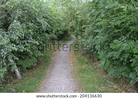 Path through the Forest An image showing the path leading through the forest  - stock photo