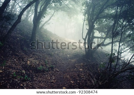 Path through the forest in mountains