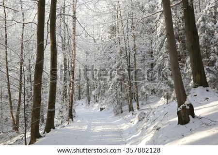 Path through the forest on a sunny winter morning. - stock photo