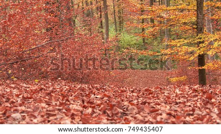 Path through the forest with beautiful autumn multicolor leaves. Forest near the city of Lausanne, canton Vaud, Switzerland