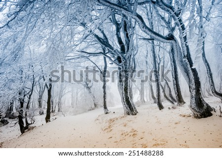 Path through the frost covered winter forest - stock photo