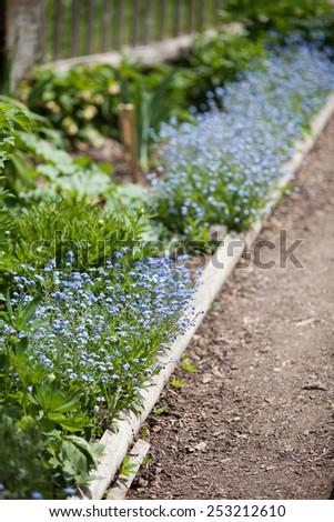Path through the garden - stock photo