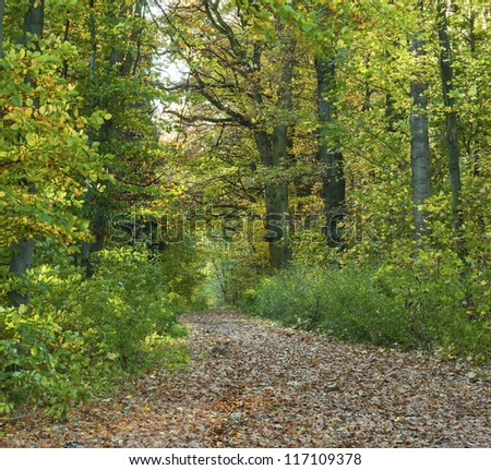 path through the oak tree forest - stock photo