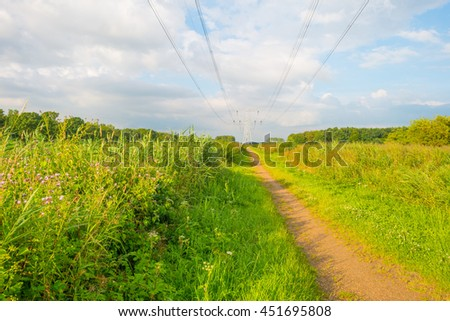 Path through wetland in sunlight in summer