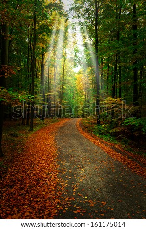 path throught autumn forest - stock photo