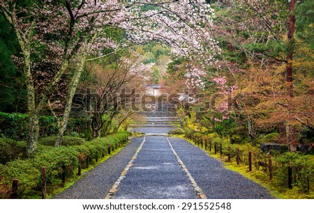 Path to japan shrine in autumn, Kyoto, Japan - stock photo