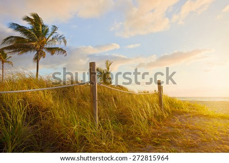 Path to the beach with Sea Oats, grass dunes at sunrise or sunset in Miami Beach, Florida with palm trees and ocean, beautiful summer tropical  nature landscape  - stock photo
