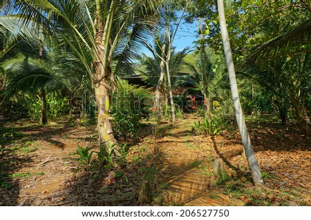 path to tropical home hidden by vegetation, Caribbean, Panama, Central America - stock photo