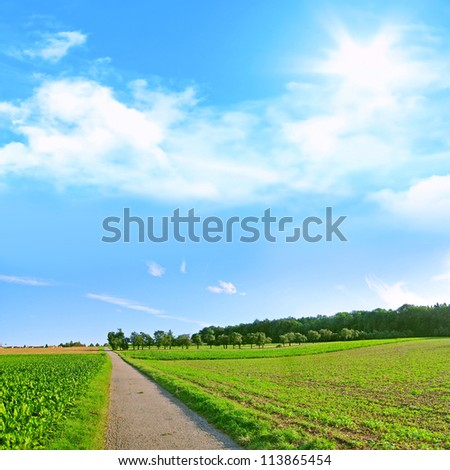 path trough the fields on a sunny day