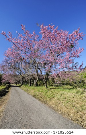 Path with beautiful flowers by the wayside. - stock photo