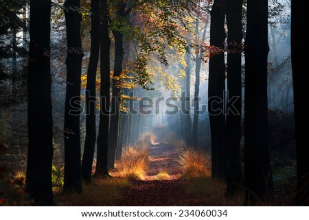 path with sunbeams in misty autumn beech forest