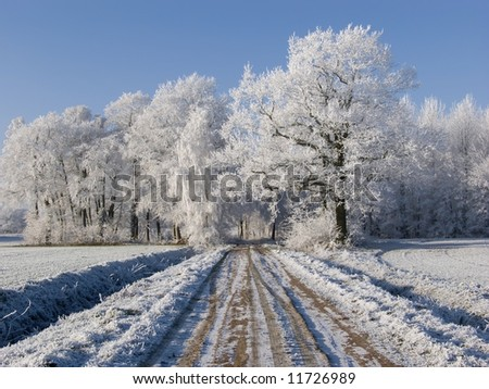 Path with white trees in winter - stock photo