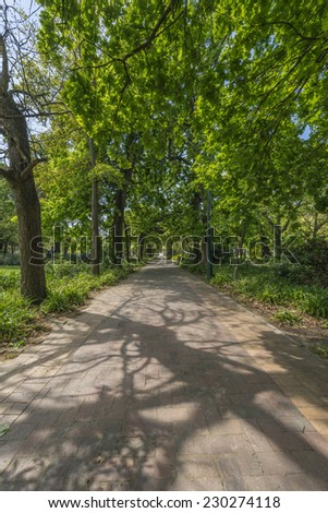 Paths, oak trees and grassy lawn in the Cape Town Company Gardens, situated in Queen Victoria Street, adjacent to the South African Parliament. Teeming with squirrels and plants - stock photo