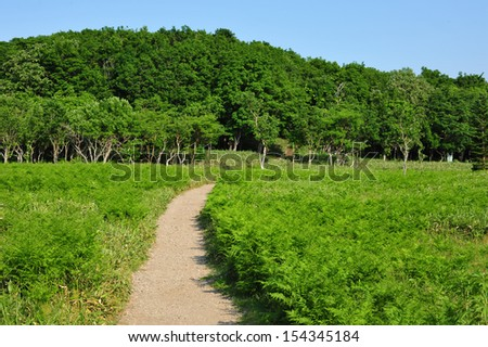 Pathway and forest in national park, north of Japan - stock photo