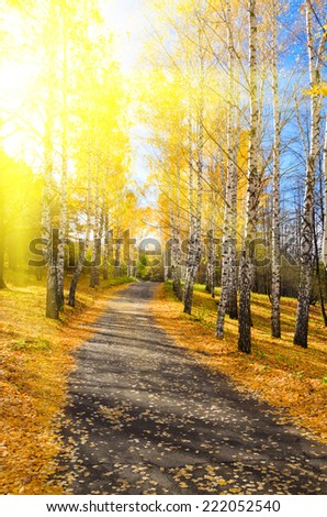 Pathway in sunny autumn forest - stock photo