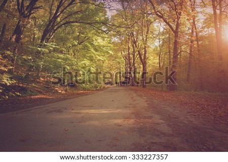Pathway in the autumn forest a sunny day