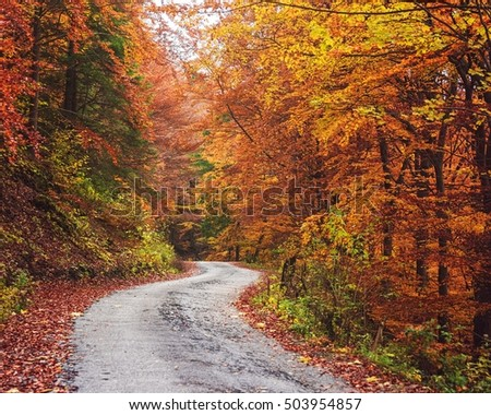 Pathway in the Autumn Forest of Mala Fatra Mountain Range near Zilina, Slovakia