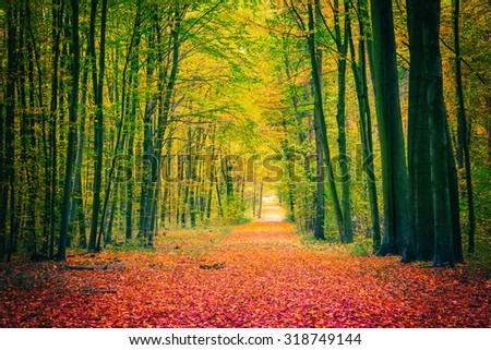 Pathway in the autumn park - stock photo