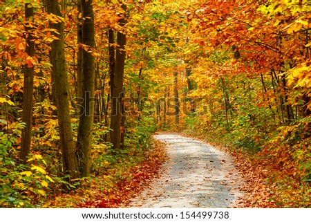 Pathway in the colorful autumn forest - stock photo