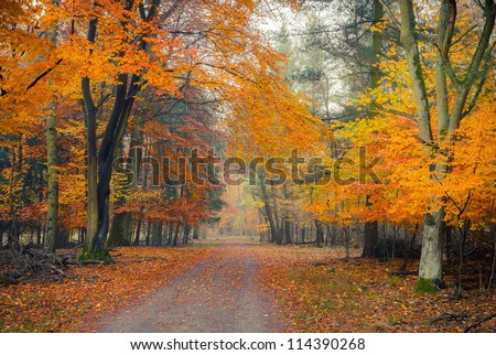 Pathway in the foggy autumn park - stock photo