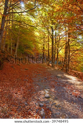 Pathway in the forest autumn