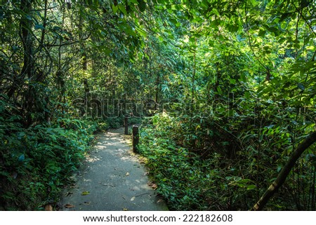Pathway in tropical forests - stock photo