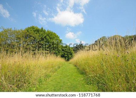 Pathway on green grass field in sunny day - stock photo