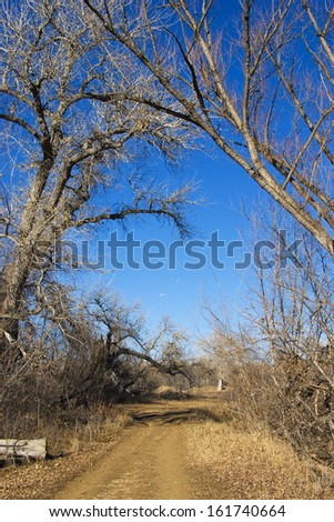 Pathway or small road over-arched with bare trees in winter on the Colorado prairie. - stock photo