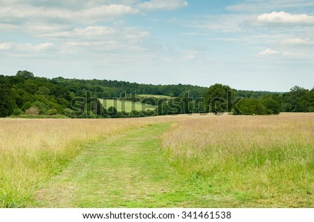 Pathway through a grassy meadow - stock photo