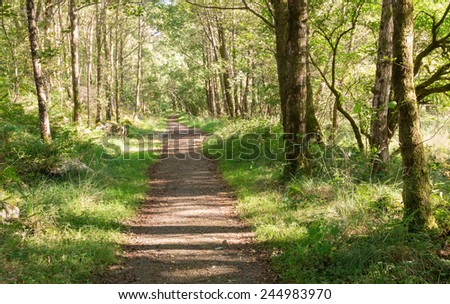 Pathway through a lush green Scottish forest around Loch Shiel - stock photo