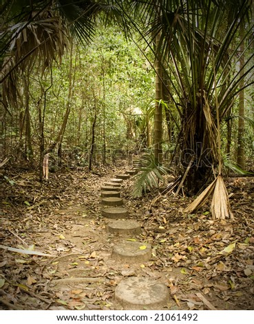 pathway through a Sydney Rainforest- The forest of tranquility - stock photo