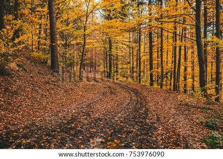 Pathway through the autumn forest, Vintage photo of autumn forest